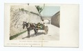 The Market Delivery, Nassau, B. I (NYPL b12647398-62411).tiff
