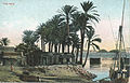 The Nile postcard Cairo.jpg