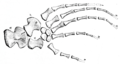 The Osteology of the Reptiles p181 Fig-147.png