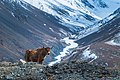 The Wildlife of Karakoram.jpg