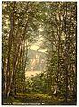 The Zauberhole (Enchanted Grotto) and Rheinstein, Niederwald Monument, the Rhine, Germany-LCCN2002714119.jpg