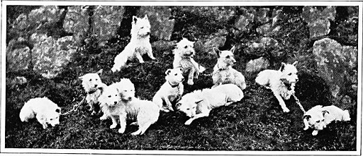 The new book of the dog; a comprehensive natural history of British dogs and their foreign relatives, with chapters on law, breeding, kennel management, and veterinary treatment (1907) (20738169235)