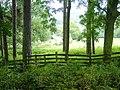 Through the trees - geograph.org.uk - 567925.jpg