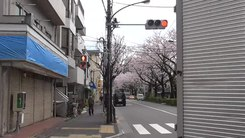 Податотека:Time-lapse of cherry tree blossoms in Japan.webm