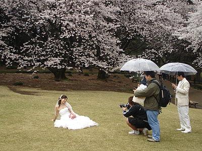 Tokyo cherry blossom 10.jpg