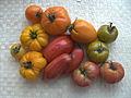 Tomates-diverses variétés.JPG