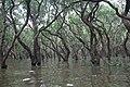 Tonle Sap Lake (9728448681).jpg