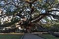 Treaty Oak, Jacksonville Florida (26709370248).jpg