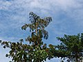 Tree (372291686).jpg