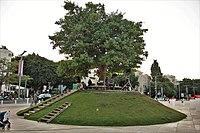 Tree Island in Habima Square.jpg