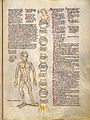 Tree trunk with ten circles classify types of pain - Vein man Wellcome L0029306.jpg