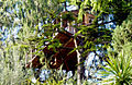 Treehouses italiane.JPG