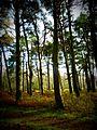 Trees (6743168015).jpg