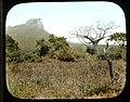 Trees and scenes (3947976791).jpg