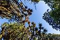 Trees by Toaroha River, West Coast, New Zealand.jpg
