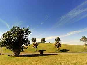 Aspire Park - Image: Trees in Aspire Park