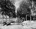 Tropenmuseum Royal Tropical Institute Objectnumber 60006573 Een laan met mahoniebomen op de plant.jpg