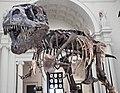 Tyrannosaurus rex (theropod dinosaur) (Hell Creek Formation, Upper Cretaceous; near Faith, South Dakota, USA) 18.jpg