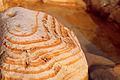 Tze'elim Canyon 16402 (11852094614).jpg
