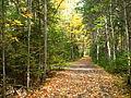 UMaine Trail 1.JPG