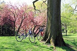 USA-NYC-Central Park