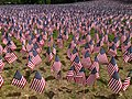 USA flags for Memorial Day 2015.jpg