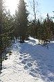 Ukonjärvi Inari Suomi - Finland 2013-03 003.jpg