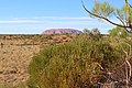Uluru-Kata Tjuta National Park bush.jpg