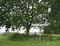 Under the spreading oak, a sparkling clean signpost - geograph.org.uk - 506809.jpg
