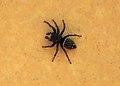 Unidentified spider - 04.jpg