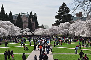 University of Washington Quad cherry blossoms 2014 - 18 (13348002824).jpg