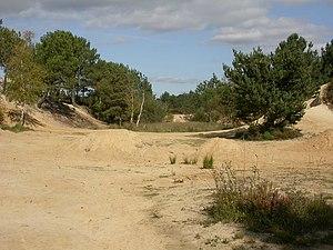 Upton Heath - Old sandpit on Upton Heath