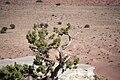 Utah - North America - San Rafael Swell - Desert (4892757324).jpg