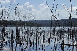 Altamiro de Moura Pacheco State Park - Image: Vegetação na represa
