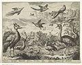 Verschillende vogels in een landschap.jpeg