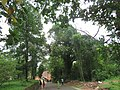 Views around Hill Palace, Tripunithura (46).jpg