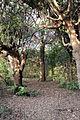 Villa la quiete, giardino, 'stanza' verde 03.JPG