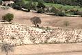 Vineyard - Bağ, Karaisalı.jpg