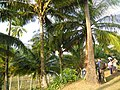 Viper island andmans (8).jpg