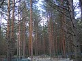 Vozhegodskiy r-n, Vologodskaya oblast' Russia - panoramio - Сергей Зубов (26).jpg