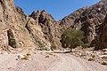 Wadi Gnai 2020-03-08-12.jpg