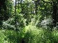 Wald des Gipsberges bei Merzig.jpg