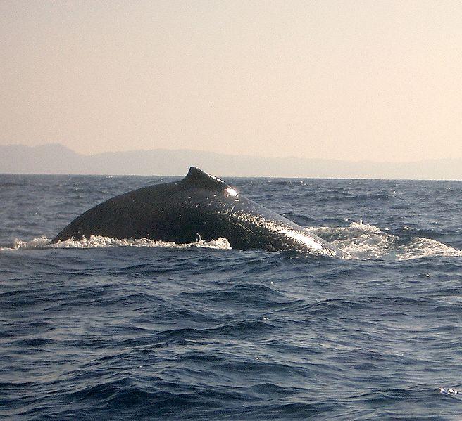File:Wale St. Lucia.jpg