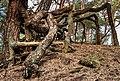 Wandeling over het Hulshorsterzand-Hulshorsterheide 07-03-2020. (d.j.b) 18.jpg