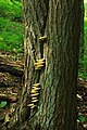 West Branch Research and Demonstration Forest (20) (27990984542).jpg