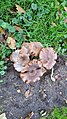 Westzaanplantsoen-paddenstoel (1).jpg