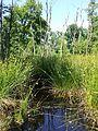 Wetlands near Darány sl6.jpg