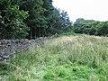White Crag Plantation - geograph.org.uk - 536855.jpg