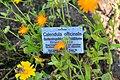 Wikipedia 13. Fotoworkshop Botanischer Garten Erlangen 2013 by-RaBoe 089.jpg