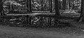 Wilde zwijnen (Sus scrofa) zoel. Locatie, Kroondomein Het Loo 04.jpg